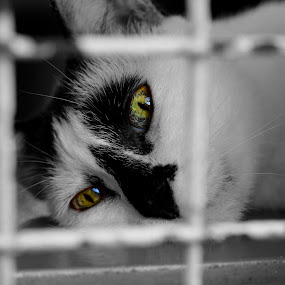 by Alex Chia - Novices Only Pets ( cats, cat, black and white, emotions, cage, eyes )