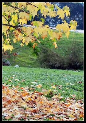 Cadono le foglie di Dolcetta