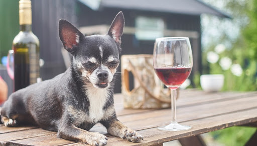 How Bad Is Alcohol For Dogs? What Should I Do If My Dog Accidentally Drinks Some?