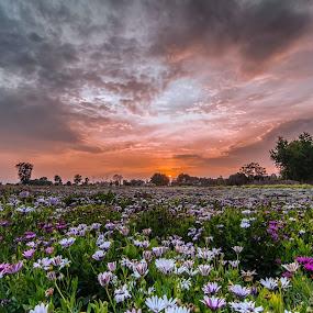 Full Bloom by KP Singh - Flowers Flower Gardens ( punjab, beauscape, langrian, malerkotla, flowers, dhindsa,  )