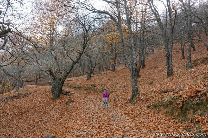 Ruta otoñal por los castañares de Pujerra e Igualeja