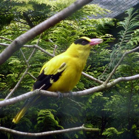 Photo: Exotic bird in Germany