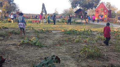 Photo: in the pumpkin patch