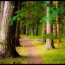 Come walk with me by Linda Macdonald - Landscapes Forests