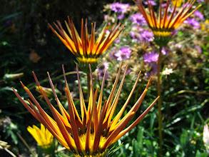 Photo: inny kwiat