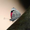 Butterfly 80