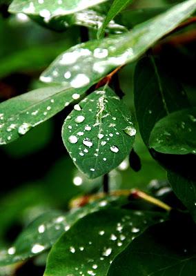Green leaf di PhotoBySaraPesucci