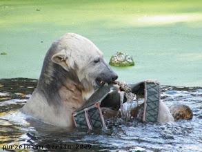 Photo: Aussie Dog und Baumstamm werden gleichzeitig bespielt ;-)