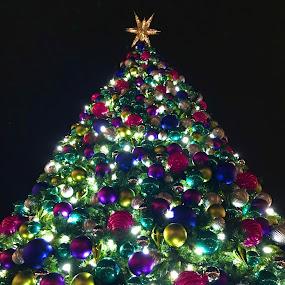 O Christmas Tree by Chris Montcalmo - Public Holidays Christmas ( christmas tree, christmas ornaments, christmas )