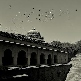 Freedom! by Abhishek Majumdar - Buildings & Architecture Statues & Monuments ( madhur, sarbajit, vikram, prithvi, nitesh )