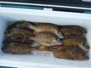 Photo: 釣果です。 オオツさん、フエフキたくさんと・・・