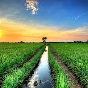 Serenity Stand Alone by SyaFiq Sha'Rani - Landscapes Prairies, Meadows & Fields ( field, sky, hdr, paddy, path, sunrise )