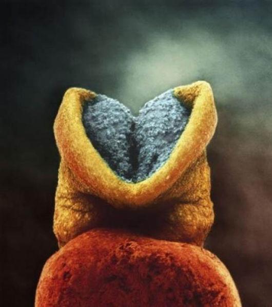 creier_dezvolta_embrion.jpg