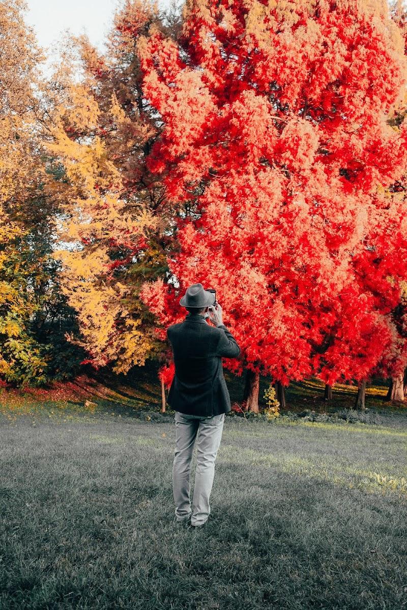 Colori d'autunno di matroxx350