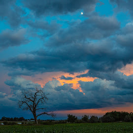 Berthoud Lake Sunset by Richard Duerksen - Landscapes Prairies, Meadows & Fields ( moon, co, blue hour, sunset, berthnoud lake, silhouette tree )