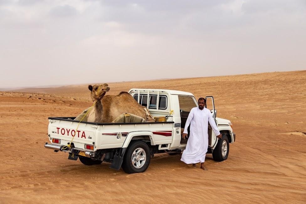 samochodem po Omanie, wielbłąd na pace, pustynia