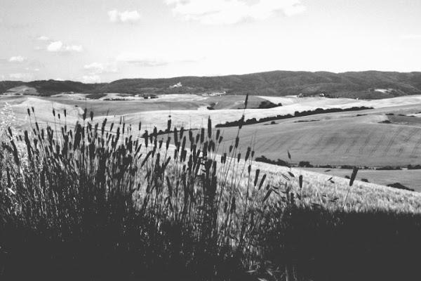 Dolci colline in monocolore di marfy