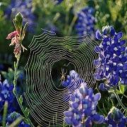 Приметы с пауком