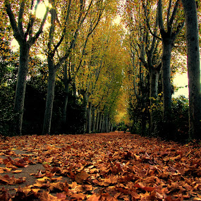 LES FEUILLES MORTES... by Luis Orchevecs Ferenczi - Nature Up Close Leaves & Grasses ( fall leaves on ground, fall leaves )