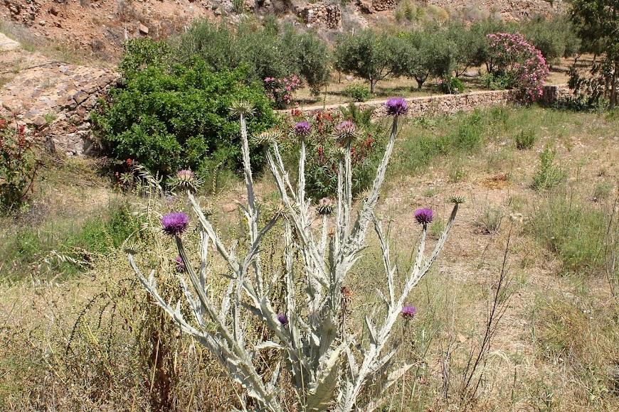 Flora en la primavera del Cabo de Gata en Rodalquilar.