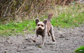 Photo: Sam op snelheid.