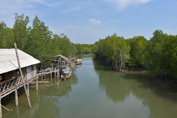 Cruise through Thung Yee Pheng Mangrove Forest