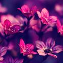 purple flower wallpapers icon