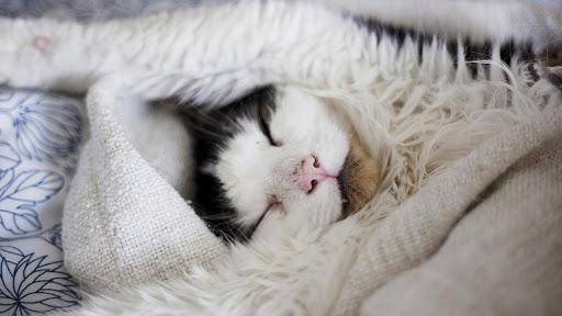 Cute Cat Live Wallpaper: fondos de pantalla hd capturas de pantalla 7