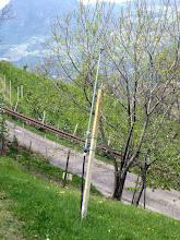 Photo: Regner, relativ hoch. Blätter sollten mit Vorsicht beregnet werden, im Frühjahr gar nicht!