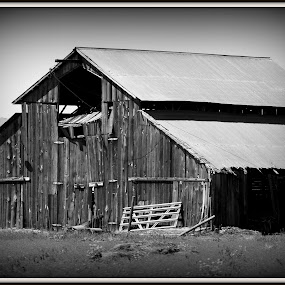 by Anna Heaslett - Buildings & Architecture Public & Historical ( country, rustic, rural, old, backroads, barn, silo, farm, crops, family,  )