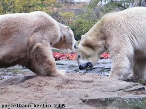 Photo: Knut und Gianna diskutieren ;-)