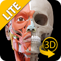 Muscular System 3D Anatomy Lt icon