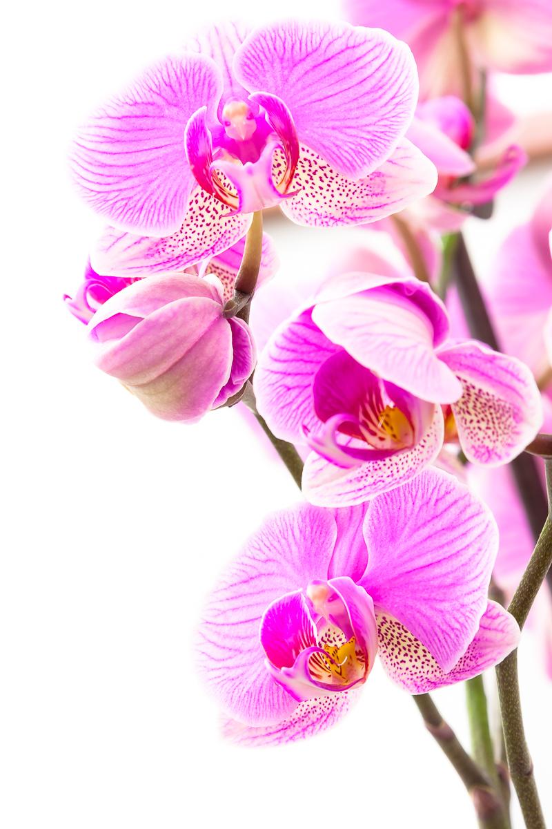 Orchidea di Dario Lo Presti