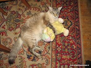 Photo: Sinjo met het speeltje van Fee