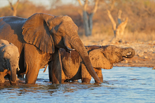 The poaching coincided with the disarming earlier this year of Botswana's rangers.