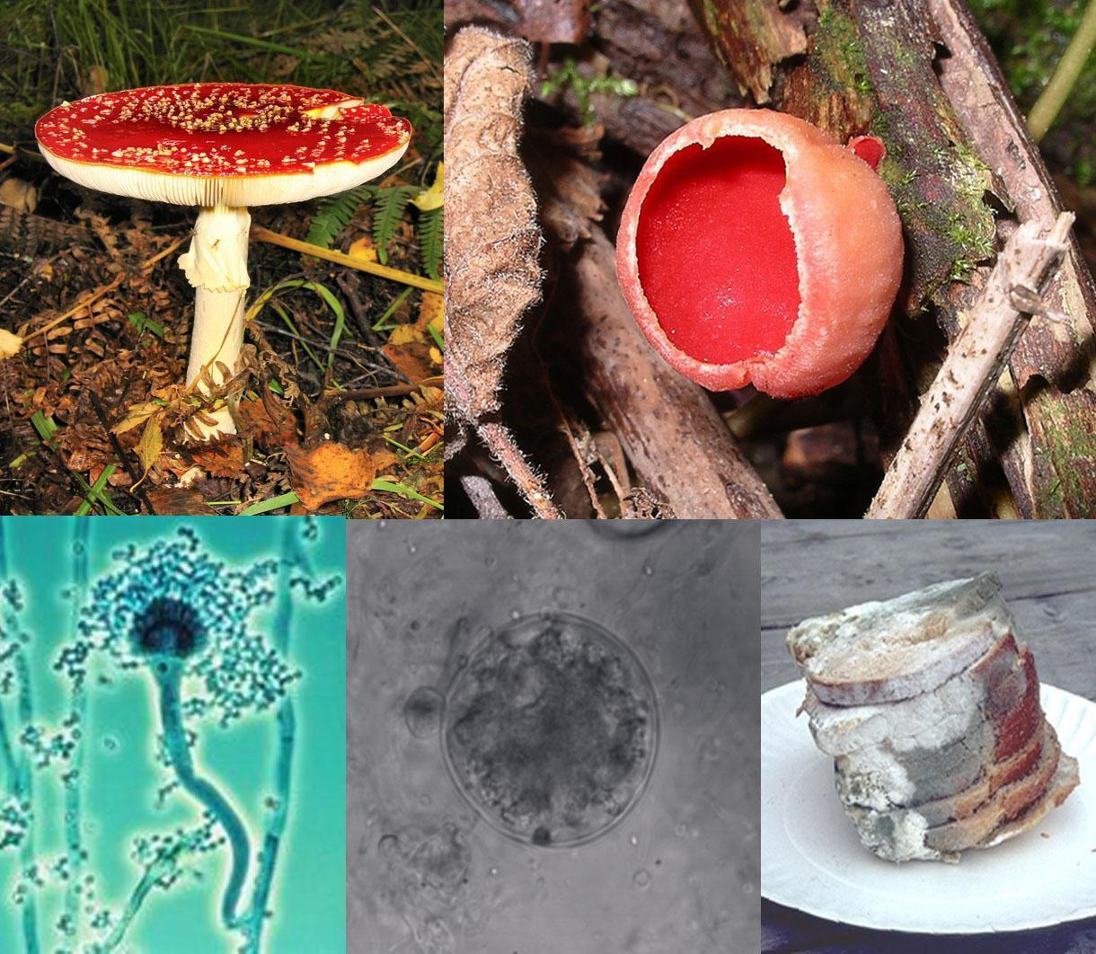 Fungi_collagejpg