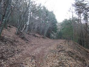 林道に合流する