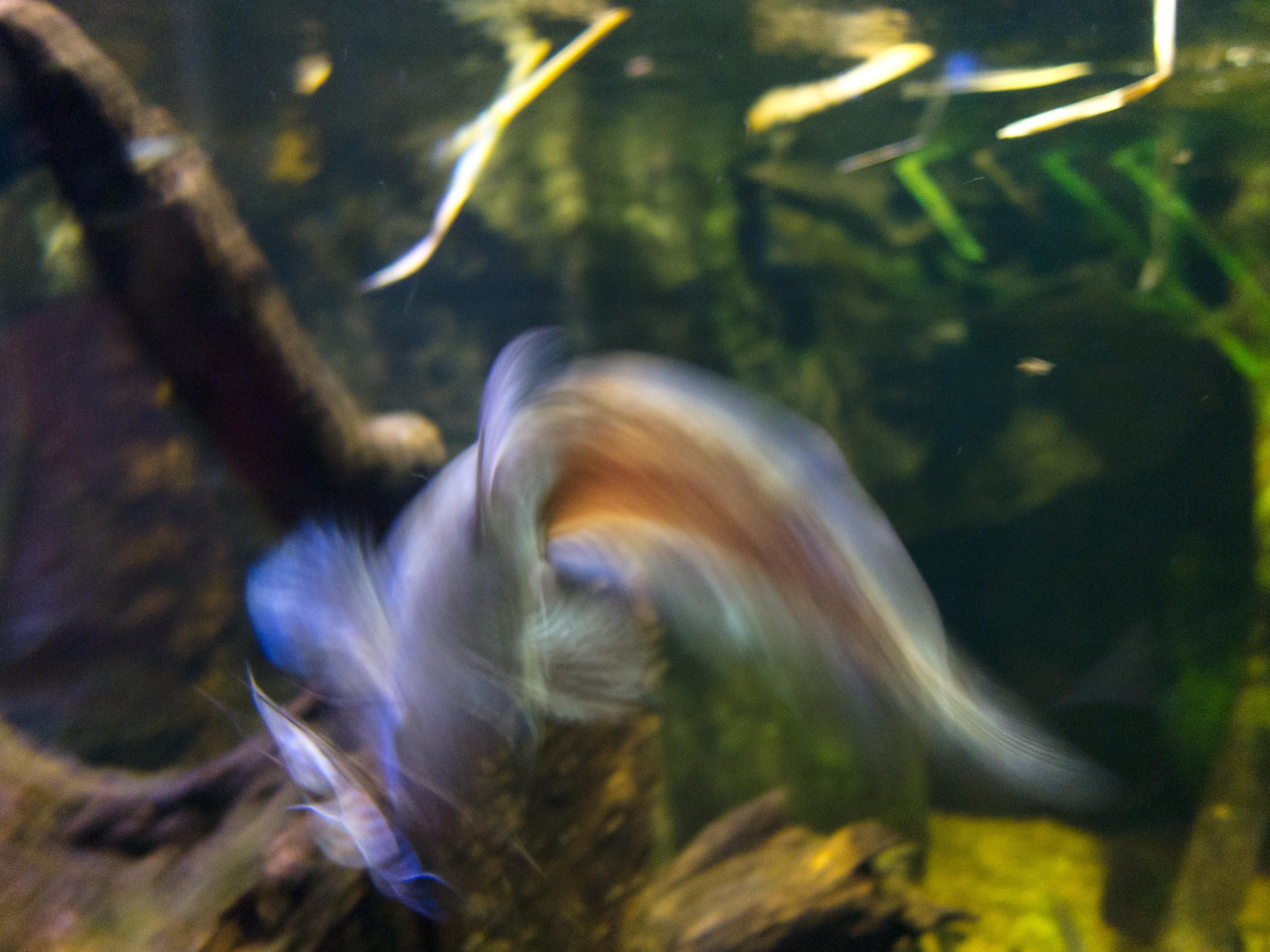 Photo: Catfish - Sydney Aquarium