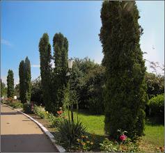 """Photo: Conifere - de pe Calea Victoriei, Mr.3, din Parcul Bisericii Ortodoxe """"Invierea Domnului"""" - 2017.06.21"""