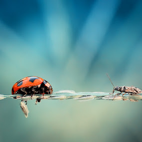 meeting  by Angga Putra - Animals Insects & Spiders