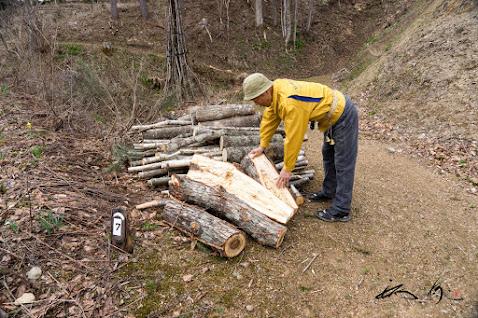 長年の経験から木の健康を見極める武市さん