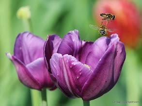 Photo: Bee aerobatics