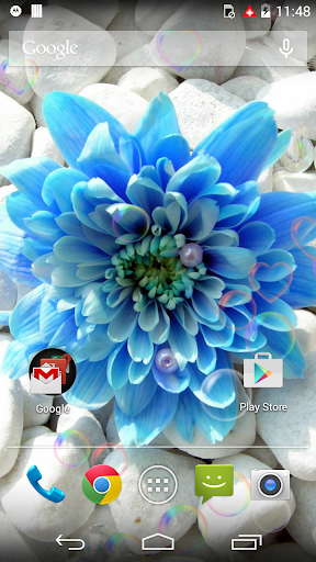 Beauty Blue Love Flower LWP