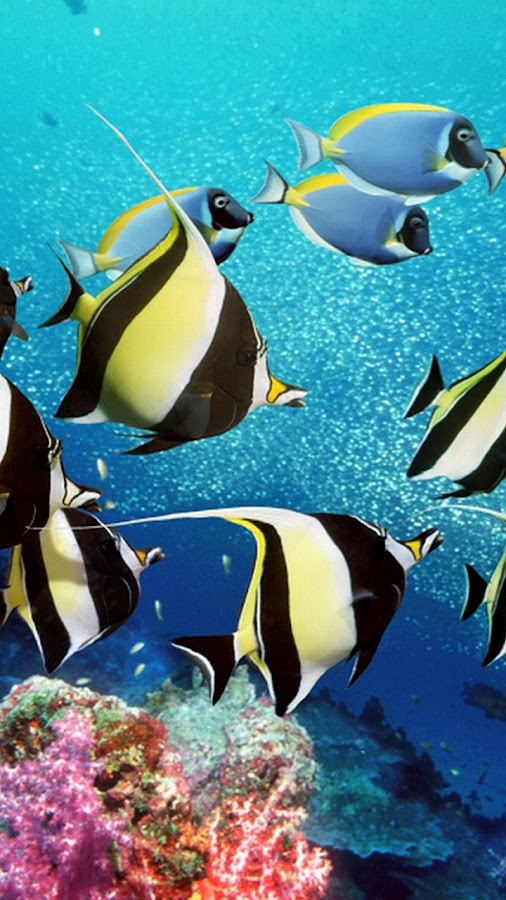 Aquarium fond d 39 cran anim avec des poissons for Fond ecran aquarium