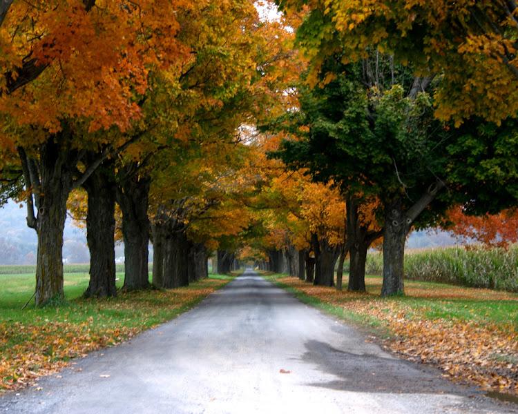 Photo: Fall leaves
