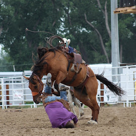 Ouch! by Lacey Fiorelli  - Sports & Fitness Rodeo/Bull Riding ( horse, sports, outdoors, dirt, rodeo, animals, people, equine )
