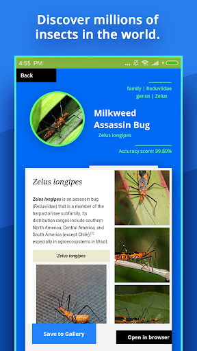 Insect Identifier - Apps on Google Play