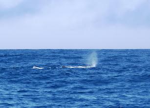 Photo: Valas suihkuttaa