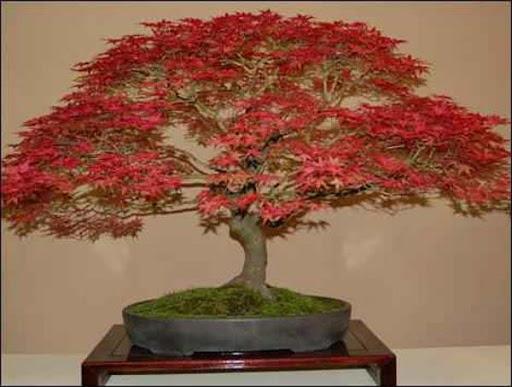 日本の盆栽のデザイン