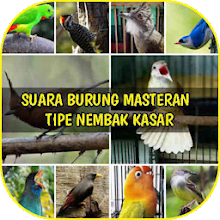 Audio Masteran Burung Tipe Nembak Kasar Download on Windows